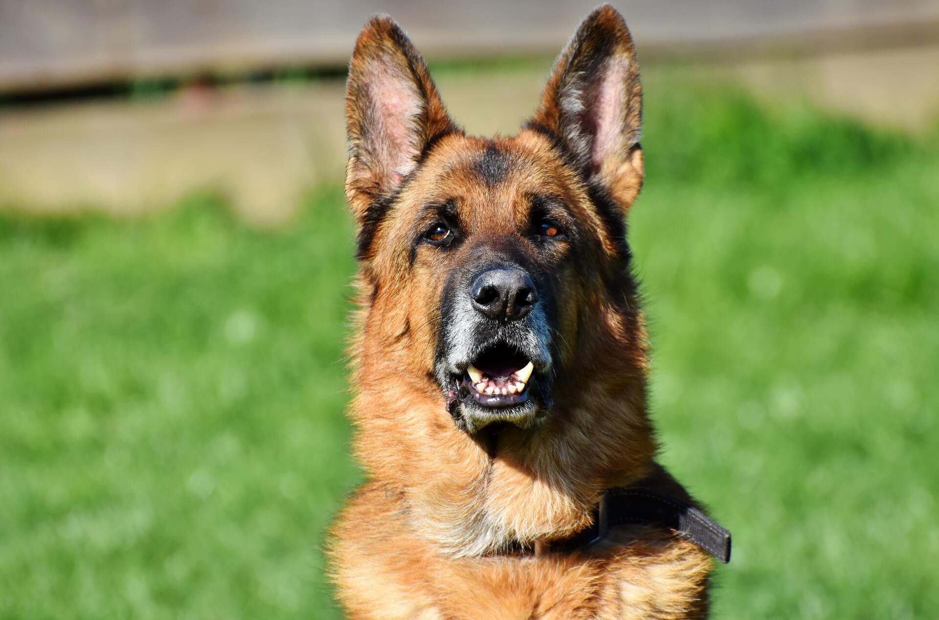 elektronischer wachhund schaeferhund